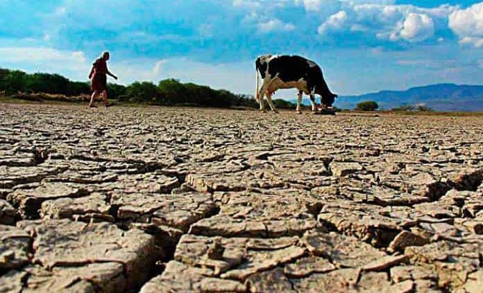 Azota a San Luis Potosí la peor sequía en 15 años