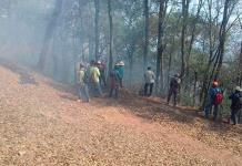 Combaten incendio forestal en Rioverde