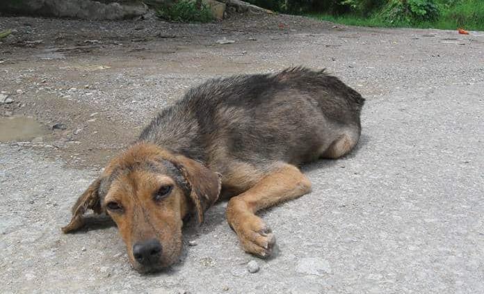 Aumentan los casos de maltrato animal
