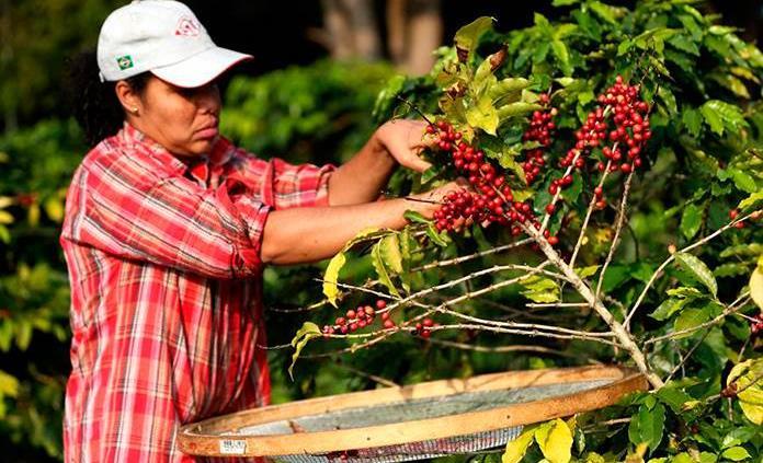 Tecnología, una clave para una agricultura más sustentable en Latinoamérica