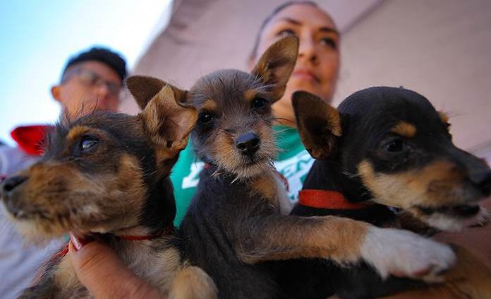 Los perros nacen preparados para comunicarse con las personas