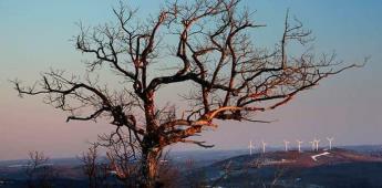 Crisis de clima y biodiversidad deben combatirse juntas, advierte la ONU