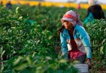 Destaca SLP negativamente por trabajo infantil