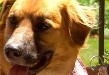 En el Día Mundial del Perro, piden recursos para esterilizaciones