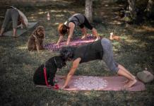Practicar yoga con perros: el inicio de un nuevo vínculo entre dueño y animal