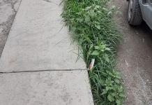 Crece maleza en las calles de Matehuala