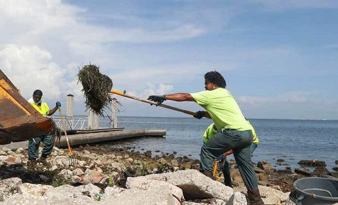 Tóxica marea roja causa nueva mortandad de peces en la costa oeste de Florida