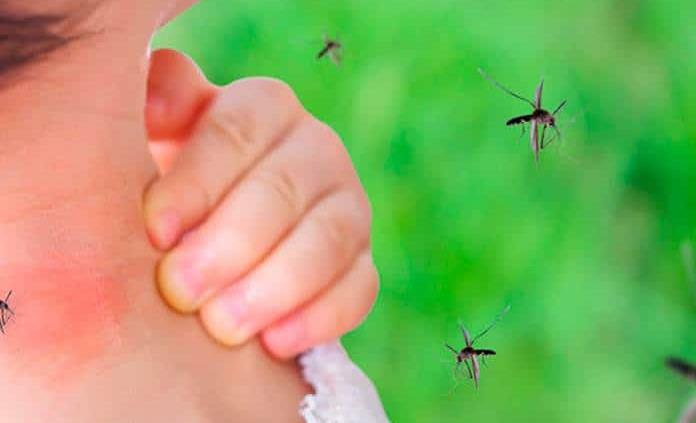 Teme Sector Salud brote de dengue
