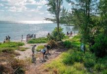 Los escasos manglares de Miami tienen quien los cuiden