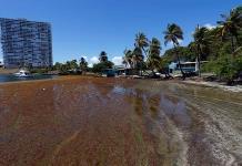Puerto Rico busca ser hub caribeño en uso de sargazo como fuente de energía