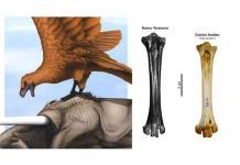 Descubren en Argentina aves carnívoras gigantes del Pleistoceno