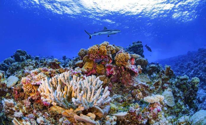 Completan amplio mapa de los arrecifes de coral del mundo