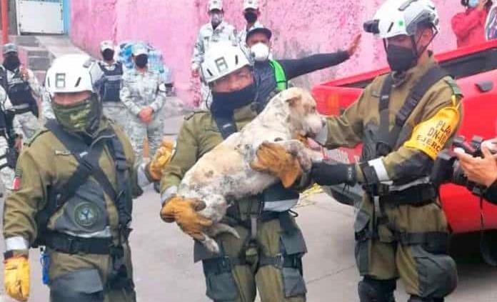 Rescatan a más de 40 mascotas en zona del Chiquihuite