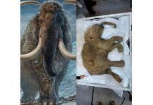 Empresa de genética busca resucitar a lo mamuts para sanar la Tierra
