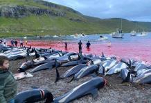 Matanza de delfines reaviva debate en las islas Feroe