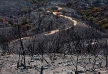 Avanzan incendios  en Málaga