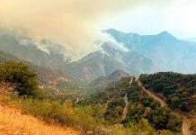 Preocupación en California por un incendio cerca de las gigantescas secuoyas