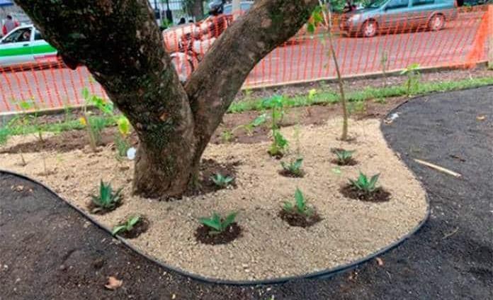 ONU impulsa jardines infiltrantes para evitar inundaciones en Xalapa