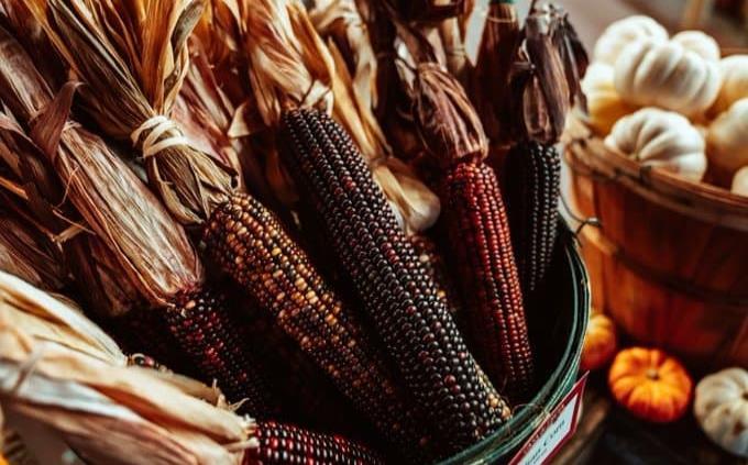 Oaxaca, hogar de 35 de las 220 razas de maíz que existen en América Latina