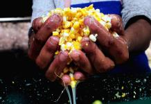Por un maíz sustentable