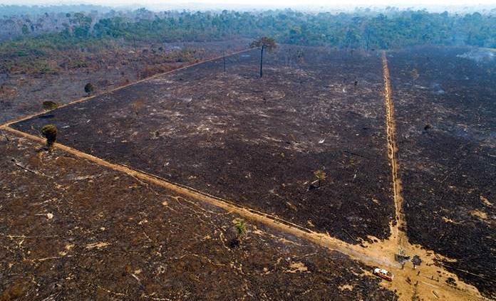 Vinculan marcas de lácteos británicas con deforestación amazónica en Brasil